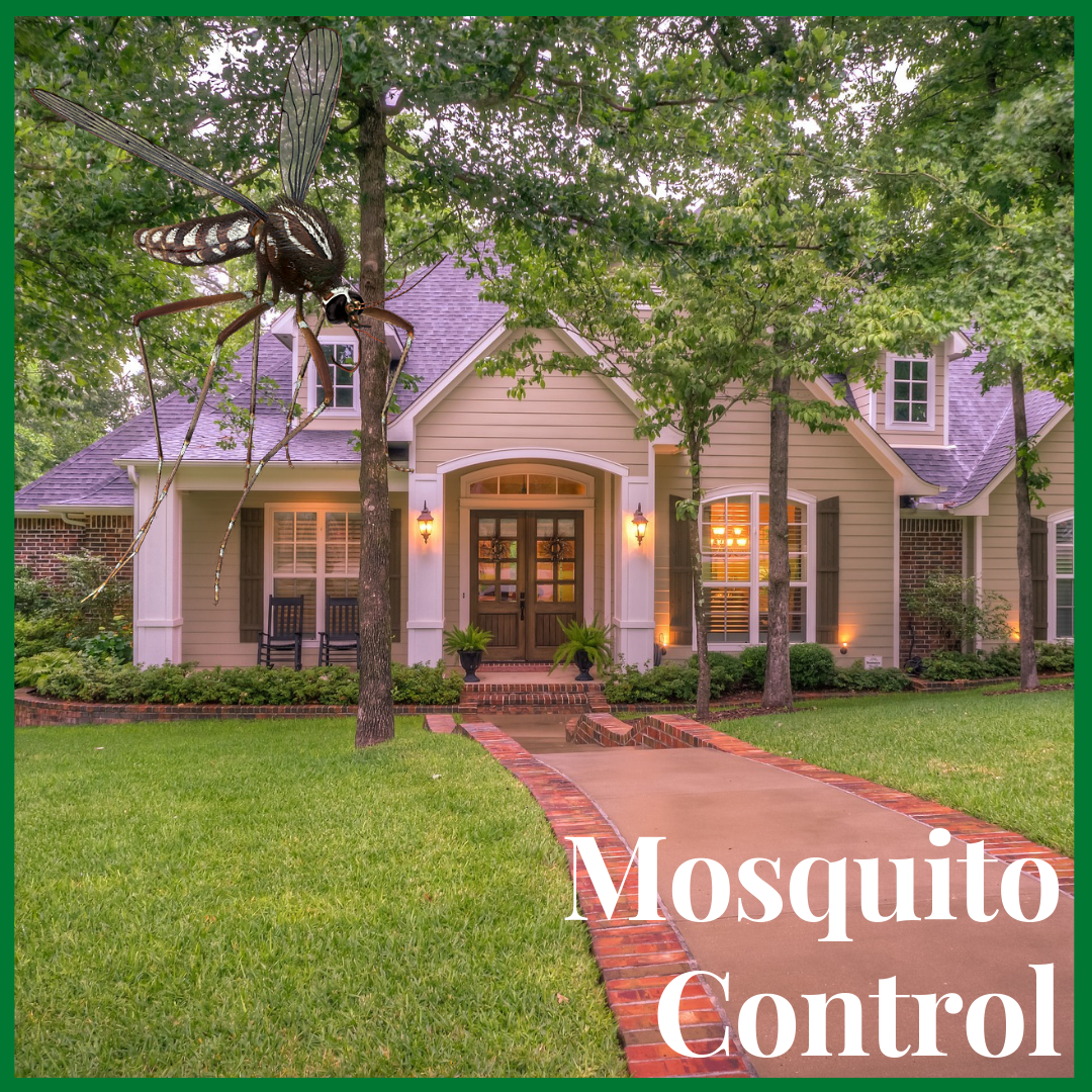 green cove springs mosquito control - Home
