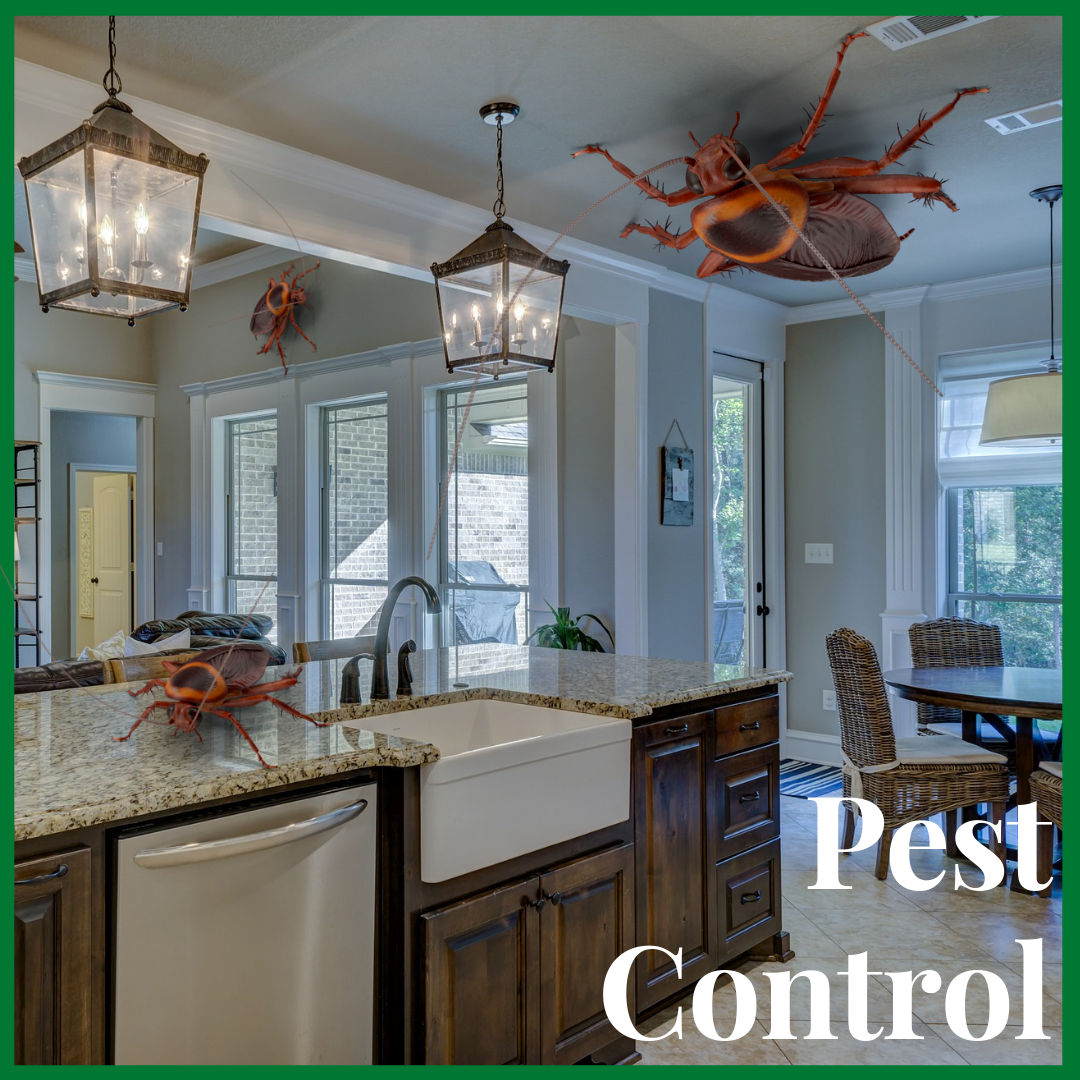 green cove springs pest control - Home