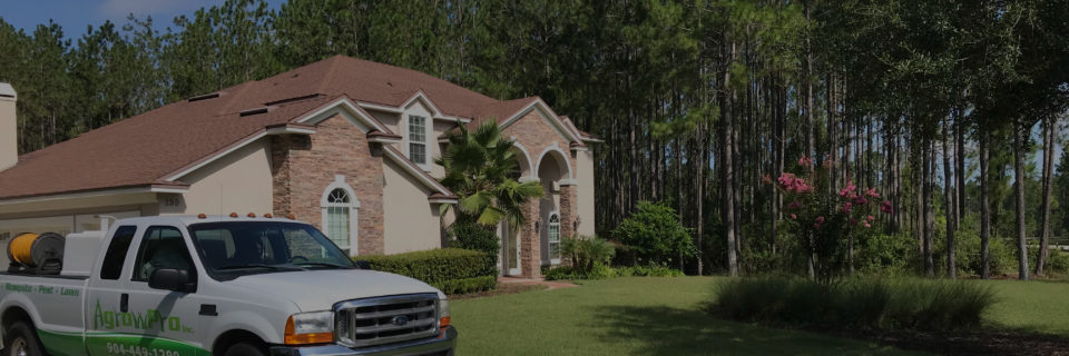 Green Cove Springs Termite Control Services